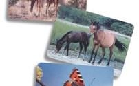 Logopedie, Color Cards, Fototheek, Dieren en Vogels