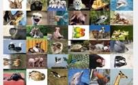 Speelgoed, beloningsstickers Aaibare dieren serie 273, 36 verschillende motieven
